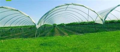 金乡县国家现代农业园大蒜绿色标准化种植基地服务中心室外配套设施建设